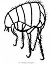 animales/insectos/piojo_2.JPG