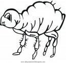 animales/insectos/pulga_1.JPG