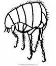 animales/insectos/pulga_2.JPG