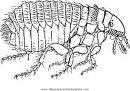 animales/insectos/pulga_3.JPG