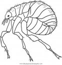 animales/insectos/pulga_4.JPG