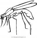 animales/insectos/zancudo_1.JPG
