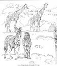 animales/jirafas/jirafas_03.JPG