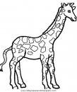 animales/jirafas/jirafas_38.JPG