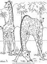 animales/jirafas/jirafas_40.JPG