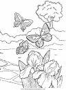 animales/mariposas/mariposas_011.JPG