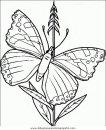 animales/mariposas/mariposas_040.JPG