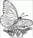 animales/mariposas/mariposas_044.JPG