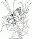 animales/mariposas/mariposas_051.JPG