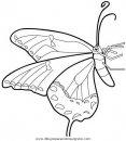 animales/mariposas/mariposas_057.JPG