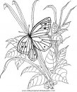 animales/mariposas/mariposas_058.JPG