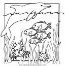 animales/mariscos/mariscos_07.JPG