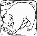 animales/osos/osos_032.JPG