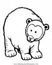 animales/osos/osos_116.JPG