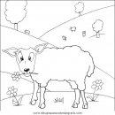 animales/ovejas/ovejas_11.JPG