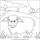 animales/ovejas/ovejas_13.JPG