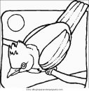 animales/pajaros/uccelli_042.JPG