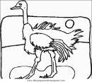animales/pajaros/uccelli_053.JPG