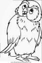 animales/pajaros/uccelli_054.JPG