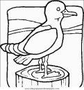 animales/pajaros/uccelli_064.JPG