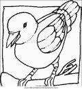 animales/pajaros/uccelli_110.JPG
