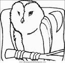 animales/pajaros/uccelli_131.JPG
