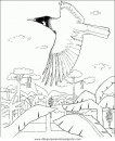 animales/pajaros/uccelli_132.JPG