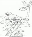 animales/pajaros/uccelli_134.JPG