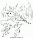 animales/pajaros/uccelli_135.JPG