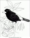 animales/pajaros/uccelli_136.JPG