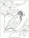 animales/pajaros/uccelli_140.JPG
