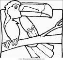 animales/pajaros/uccelli_163.JPG
