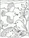 animales/pajaros/uccelli_180.JPG