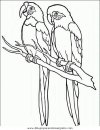 animales/pajaros/uccelli_183.JPG