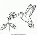 animales/pajaros/uccelli_185.JPG