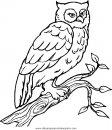animales/pajaros/uccelli_229.JPG