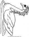 animales/pajaros/uccelli_245.JPG