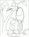 animales/papagayos/tucanes_2.JPG