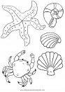 animales/peces/conchas_2.JPG