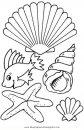 animales/peces/conchas_3.JPG