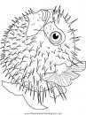 animales/peces/peces_007.JPG