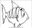 animales/peces/peces_079.JPG