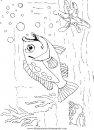 animales/peces/peces_112.JPG
