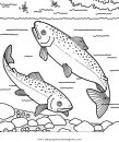animales/peces/salmon_3.JPG