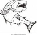 animales/peces/salmon_5.JPG