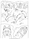 animales/perros/perros_040.JPG