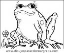 animales/ranas/ranas_54.JPG