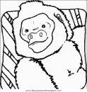 animales/simias/simias_19.JPG