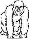 animales/simias/simias_30.JPG