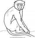 animales/simias/simias_36.JPG